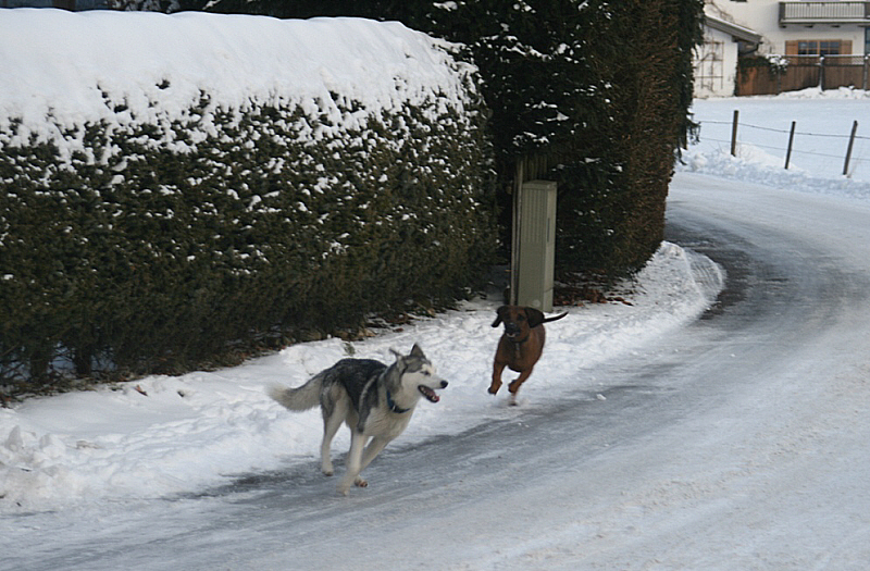 http://www.abload.de/img/03.01.10_dogfight1po1l.jpg