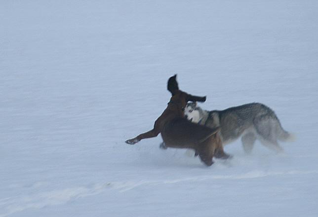 http://www.abload.de/img/03.01.10_dogfightjrel.jpg
