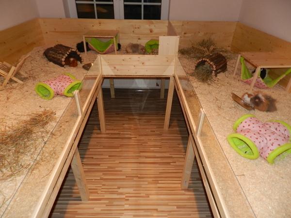 meerschweinchenb cke im selben zimmer wie weibchen meerschweinchen haltung. Black Bedroom Furniture Sets. Home Design Ideas
