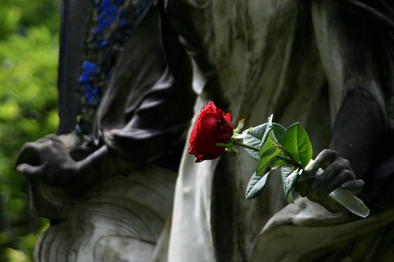 http://www.abload.de/img/07.08.10_rose34du2.jpg