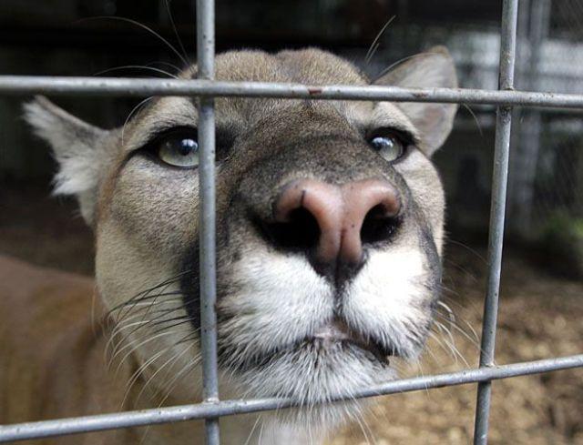 Śmieszne zdjęcia zwierząt #10 61