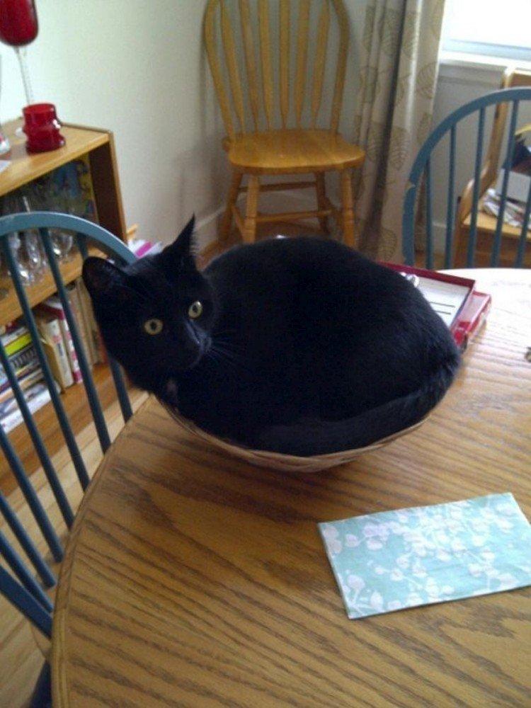 Gdzie śpią koty? 10
