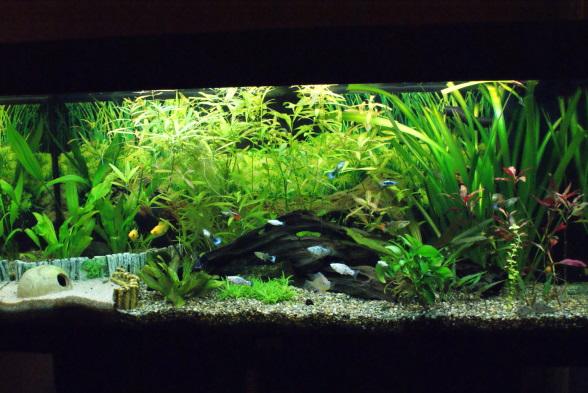 mein 180 liter aquarium seite 3 aquarium forum. Black Bedroom Furniture Sets. Home Design Ideas