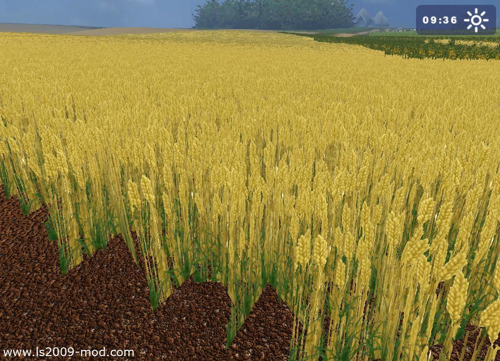 Wheat Textures