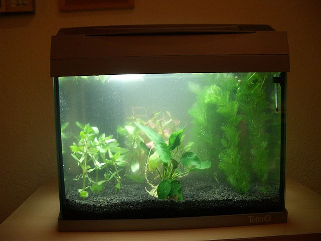 Nochmal kampffisch aquarium forum for Kampffisch futter