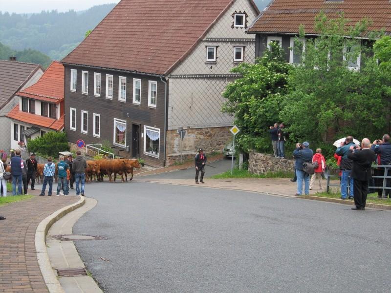 Wiesenblüten-Festumzug_03.06.2012 2012-06-03011800x600j078c