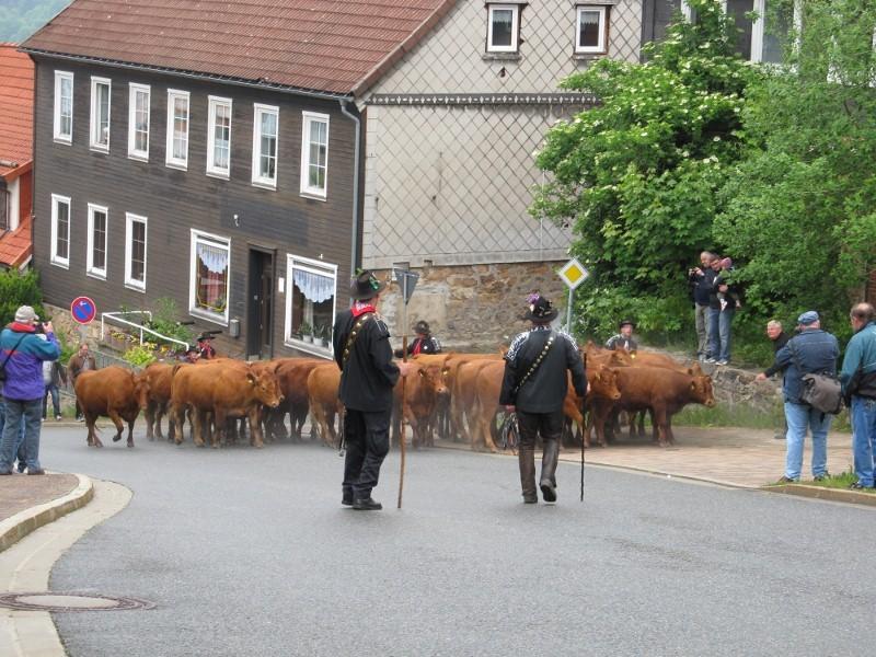 Wiesenblüten-Festumzug_03.06.2012 2012-06-03013800x600lruzg