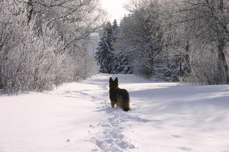 Winter  2012 2012-12-07071800x531trkup