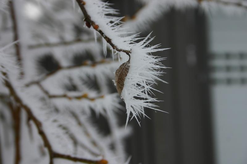 Winter  2012 2012-12-13147y9r7m