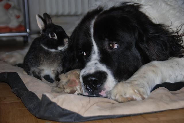 Kaninchen Und Hund Kaninchen