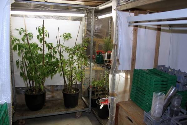 tomaten forum anbau und pflege von paprika und chili. Black Bedroom Furniture Sets. Home Design Ideas