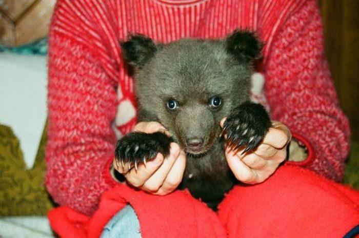Porzucony niedźwiadek 8