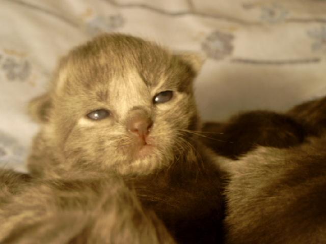 We've got kitten!!! 2wochen007m19