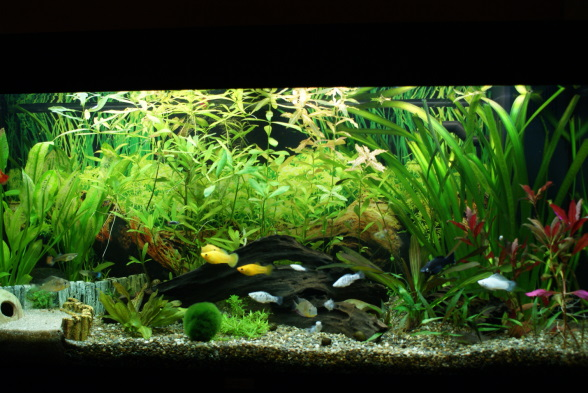 mein 180 liter aquarium seite 2 aquarium forum. Black Bedroom Furniture Sets. Home Design Ideas