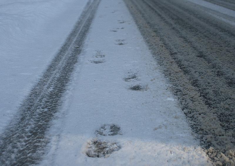 http://www.abload.de/img/31.01.10_snowsteps5b41.jpg