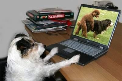 Śmieszne zdjęcia zwierząt #2 66