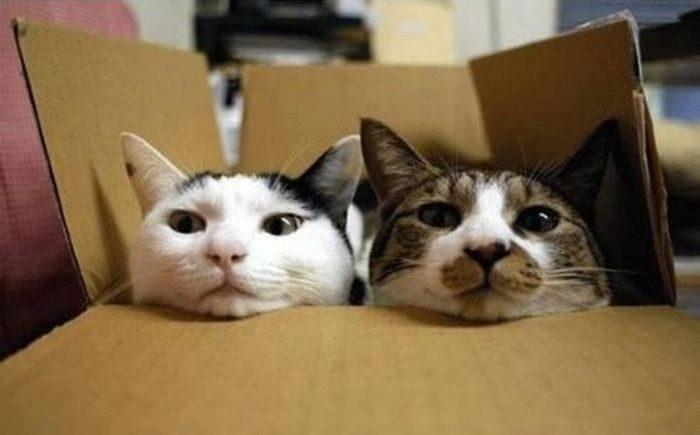 Przyczajone koty 21