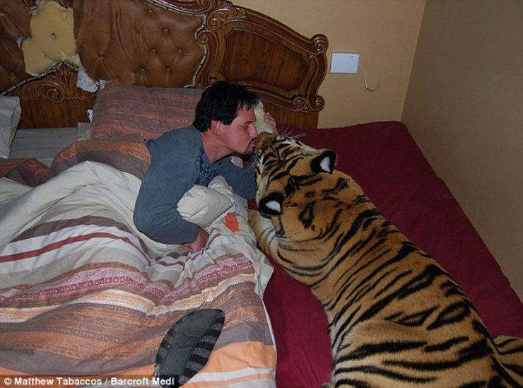 Udomowiony tygrys 2