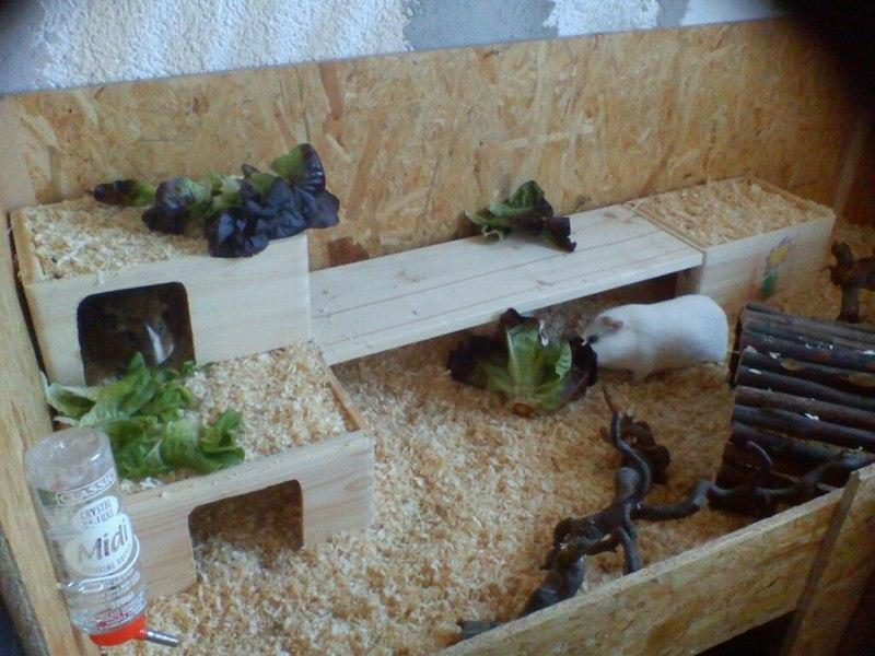 h user und inventar selbstgemacht meerschweinchen haltung. Black Bedroom Furniture Sets. Home Design Ideas