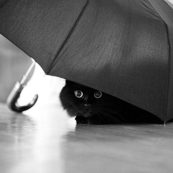 Przyczajone koty #2 3