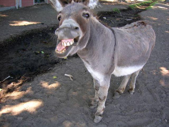 Śmieszne zwierzęta #9 38