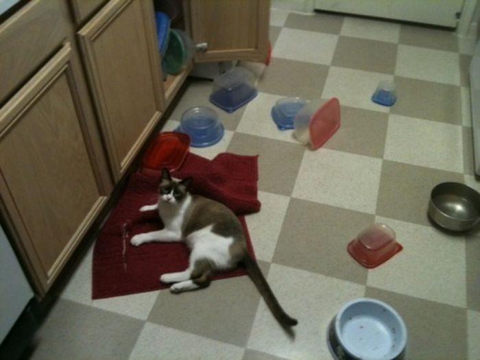 Nieznośne koty 29