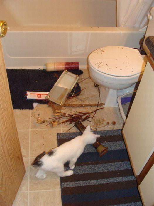 Nieznośne koty 17