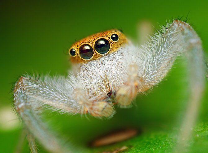 Makrofotografia - owady z bliska 30