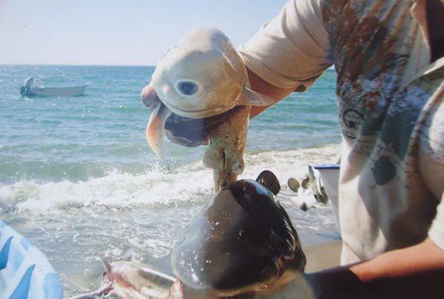 Dziwny rekin 4