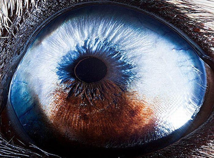 Oczy zwierząt 6