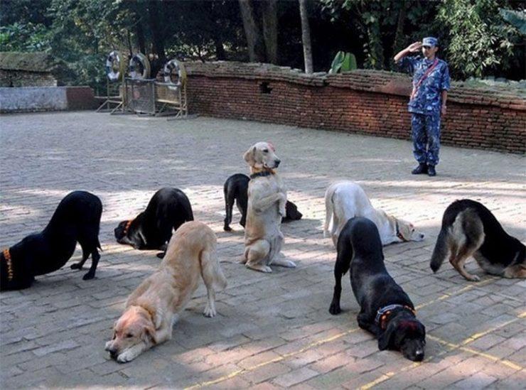 Zabawne zdjęcia psów 34