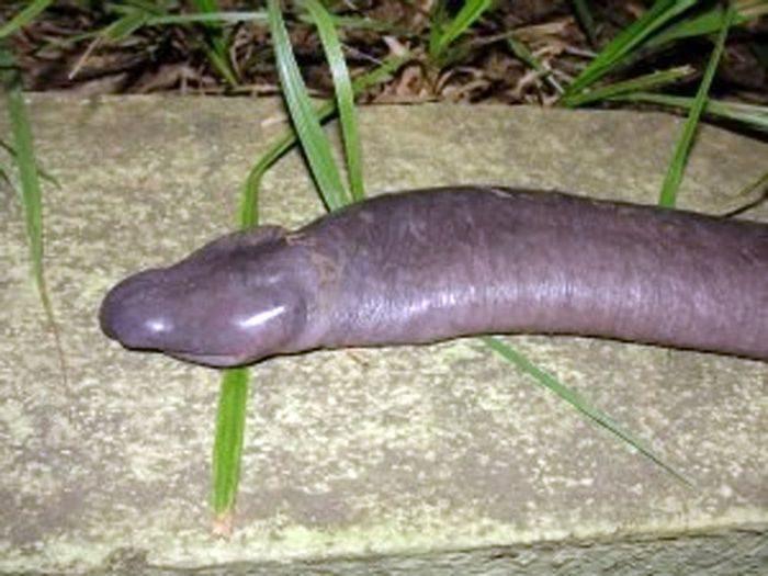 Miękki wąż 3