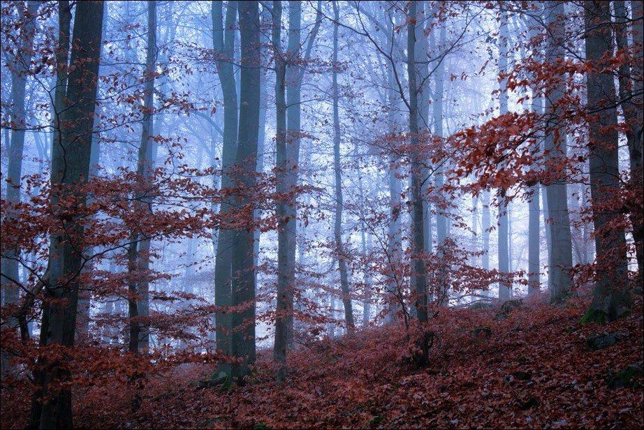 Barwy jesieni #2 30