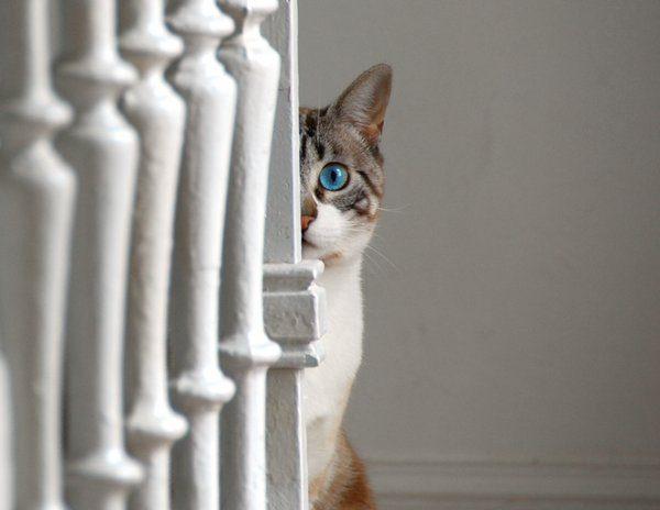 Przyczajone koty #2 28