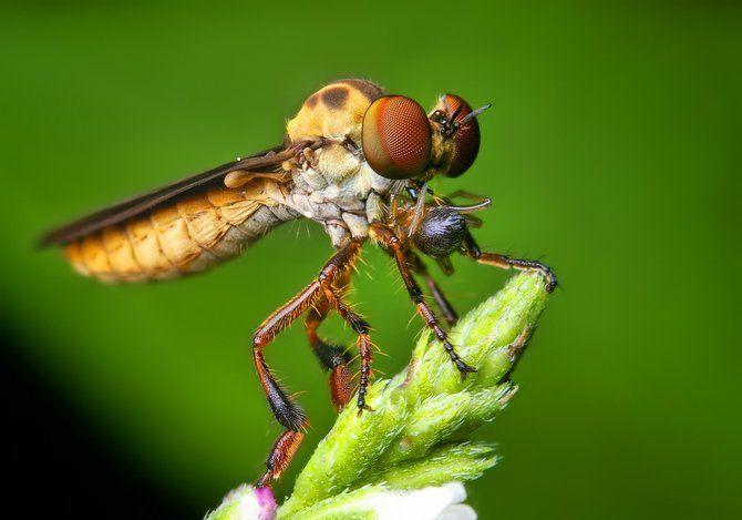 Makrofotografia - owady z bliska 45