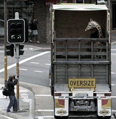Transportowcy #2 28