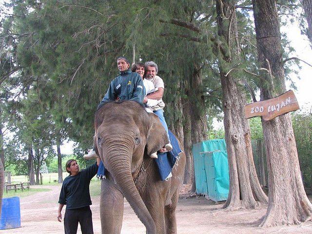Zoo dla odważnych 10