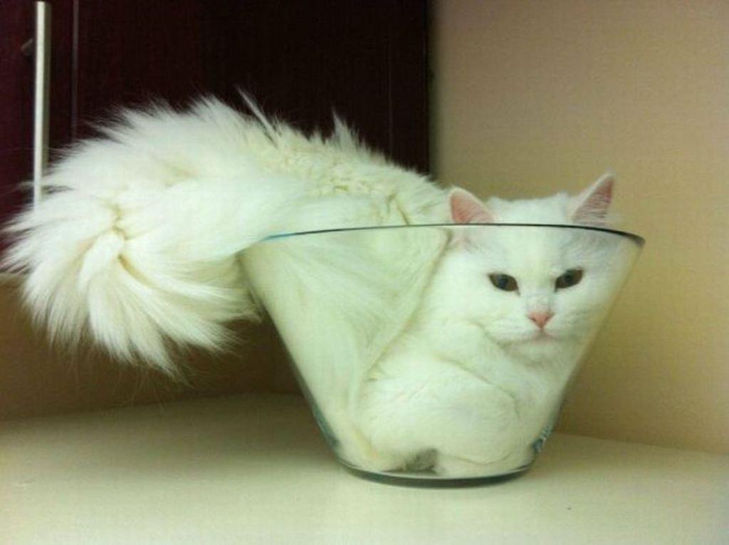 Ulubione zakamarki kotów 2
