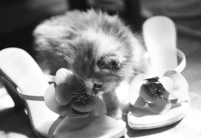 Śmieszne zdjęcia zwierząt #8 13