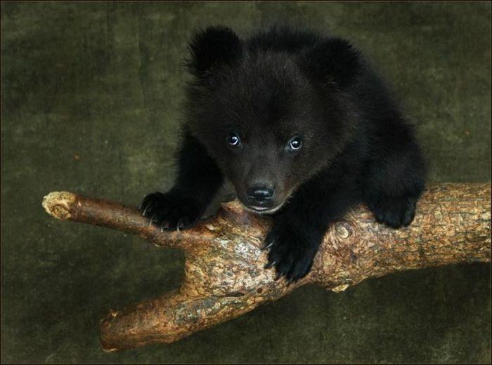 Niedźwiedzie 3