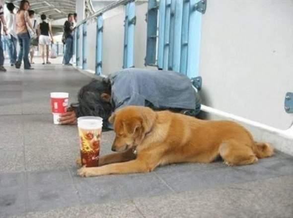 Pies - najlepszy przyjaciel człowieka 37