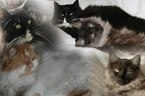 An den Beitrag angehängtes Bild: http://www.abload.de/img/banner2k1vr.jpg