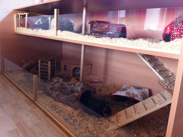 eure k fige oder eigenbauten meerschweinchen haltung seite 107. Black Bedroom Furniture Sets. Home Design Ideas