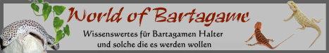 Bild gepostet im Bartagamen und Terrarien Forum | Bartagame-Info.de