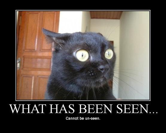 黑貓警長在仔細觀察。。。What?