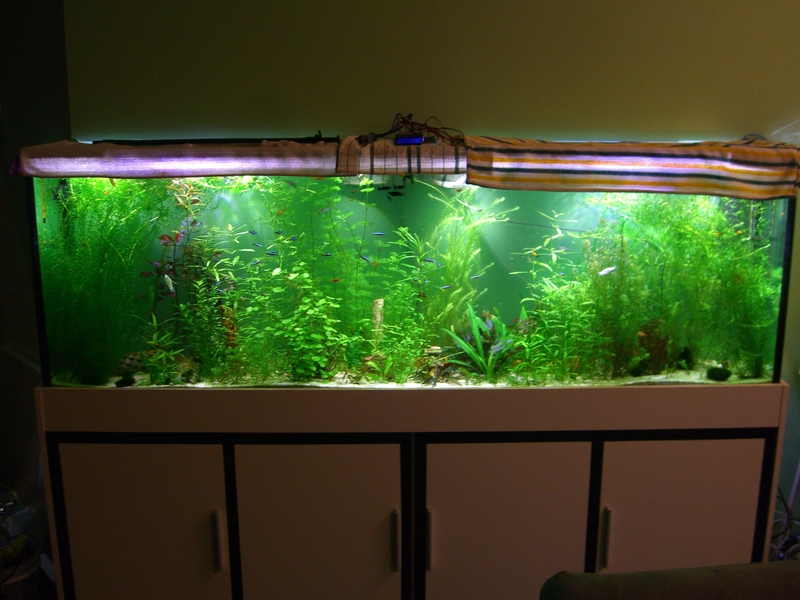 led beleuchtung aquarium led forum. Black Bedroom Furniture Sets. Home Design Ideas