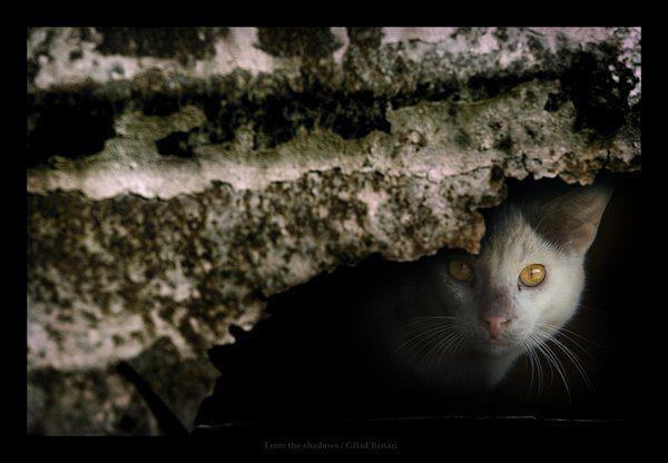 Przyczajone koty #3 12