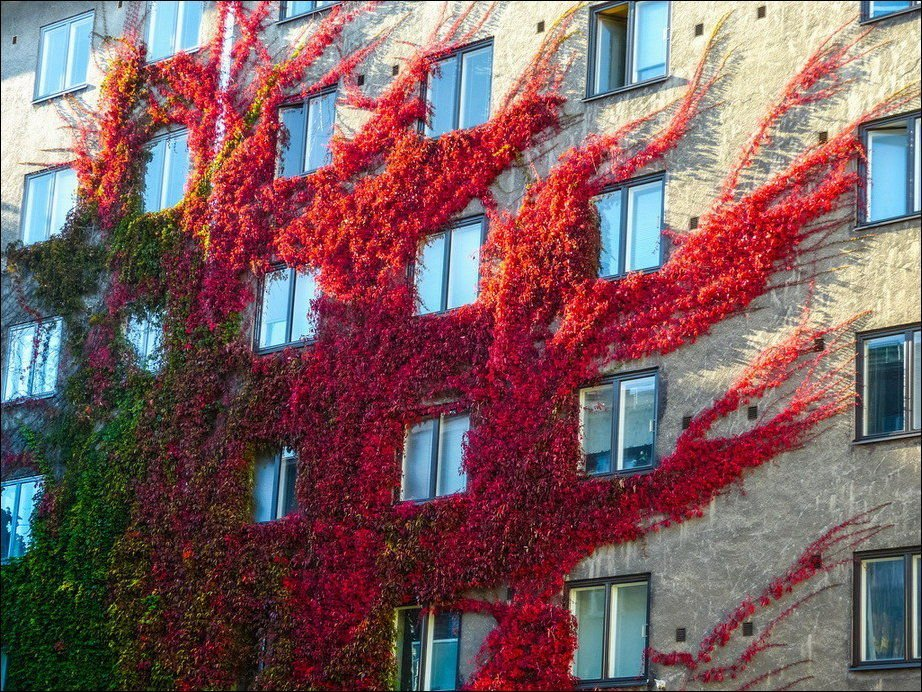 Barwy jesieni #2 29
