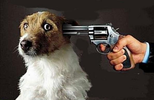 dog-gundtk7d.jpg