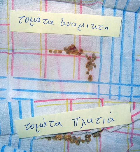 wie haltet ihr es mit dem standort von tomaten page 3 mein sch ner garten forum. Black Bedroom Furniture Sets. Home Design Ideas